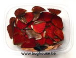 Red butterfly wings for art work