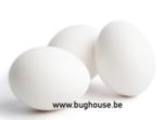 Empty Chicken egg open (COLOR WHITE)
