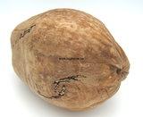 Complete Coconut naturel