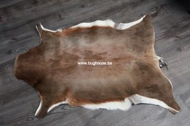 Peau de blesbok - Damaliscus pygargus phillipsi-