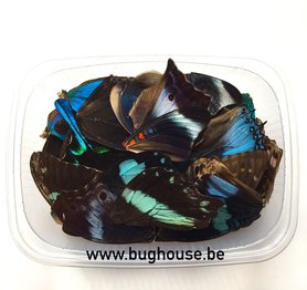 Mixed blue butterfly wings for art work