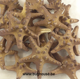 Starfish Rhinoceros (brown)