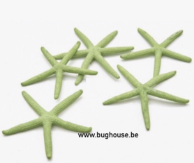 Finger starfish apple green