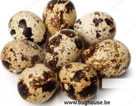 Empty Quail eggs