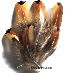 Pheasant feathers  (box 20x12x5 cm) +/- 5gr