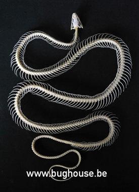 Squelette de serpent à rat en cuivre noir (Java)
