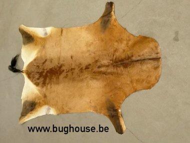 Hartenbeest skin - Alcelaphus buselaphus -