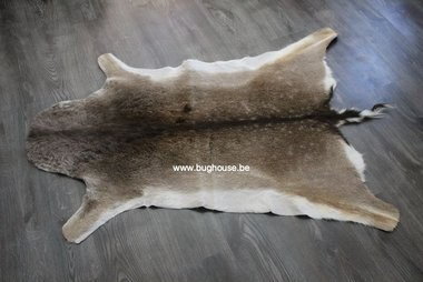 Fallow deer skin - Dama Dama -