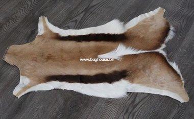 Springbok skin - Antidorcas marsupialis -