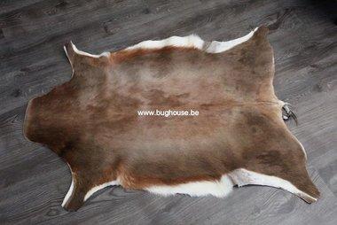 Blesbok skin - Damaliscus pygargus phillipsi -