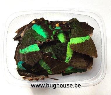 Dark green butterfly wings for art work