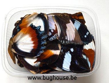 Bruin / Wit vlindervleugels
