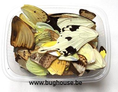 Vlindervleugels kleur : Geel