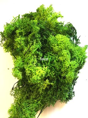 Art moss color Forest 20gr