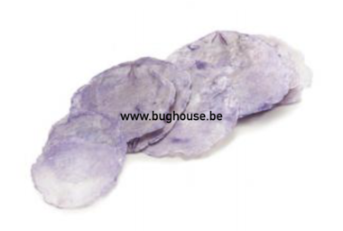 Capiz dia shells Purple (10-15 pieces)