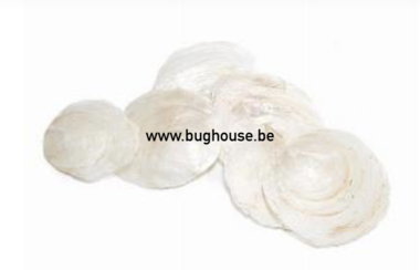 Capiz dia shells White (10-15 pieces)