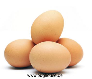 Empty Chicken egg brown