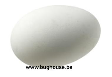 Empty Goose egg