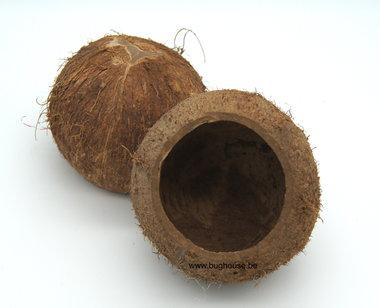 Open kokosnoot Naturel