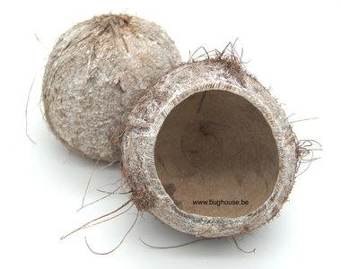 Open kokosnoot wit