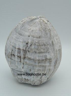 Kokosnoot wit compleet