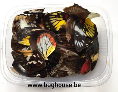 Mixed Color butterfly wings for art work