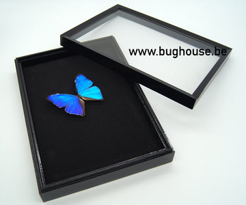 Hobby / Transport insect box