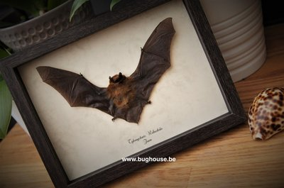 Little bat in frame