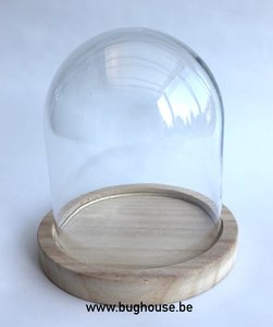 "Glass dome ""Small"" (Naturel Base) H:13cm Diam:12cm"