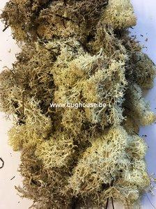 Art moss color old Forest 20gr