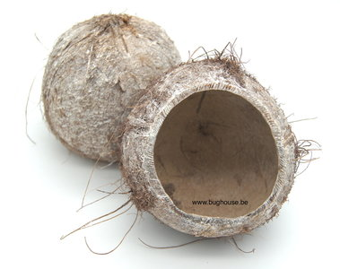 Open coco nut white