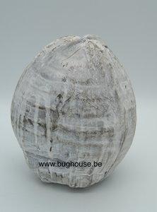 Complete Coconut white