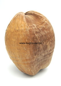 Complete Coconut naturel