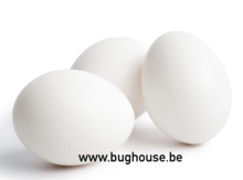 Empty Chicken egg open (COLOR WHITE)