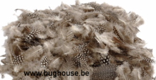 Guinea fowl feathers (box 20x12x5 cm) +/- 5gr