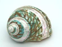 Turbo Burgos shell 8cm